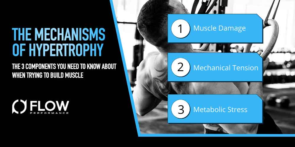 THE MECHANISMS OF HYPERTROPHY: The 3 Components You Need To Know About When Trying To Build Muscle
